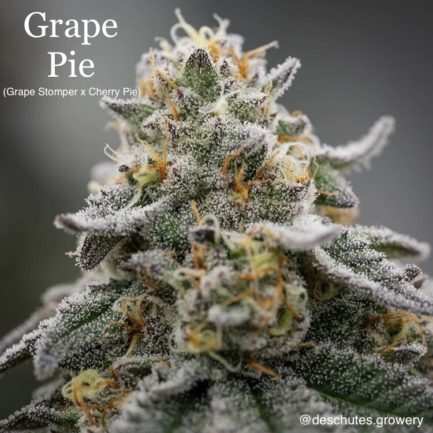 Grape Pie Regular Seeds