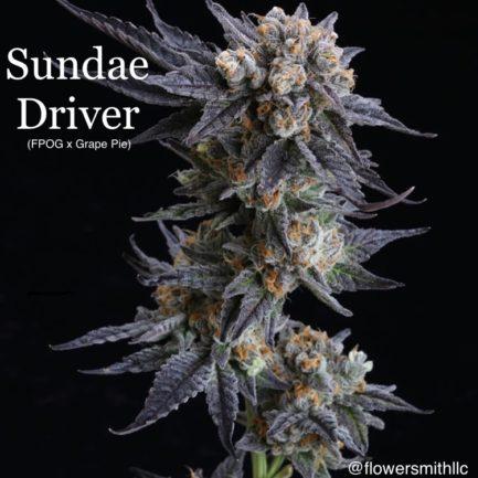 Sundae Driver Feminized Seeds