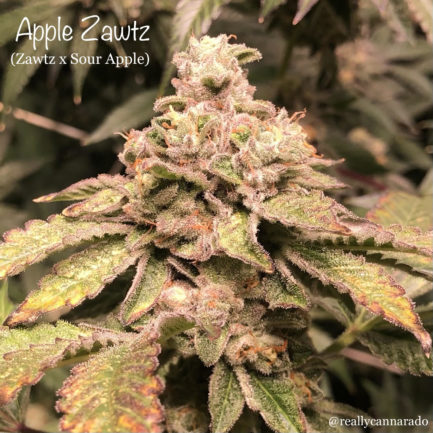 Sour Apple Feminized Seeds